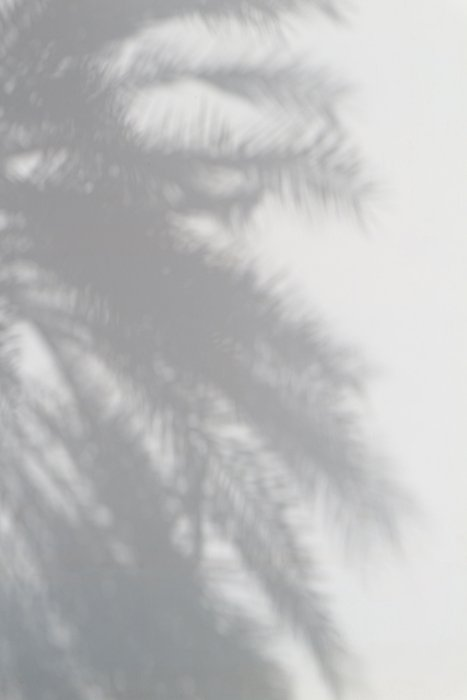 Blurry photo of the shadows of a palm tree