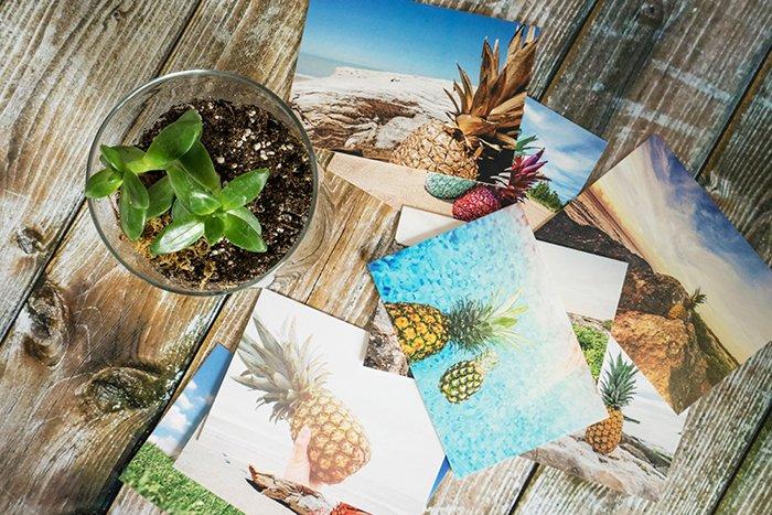 Photo of summer photos