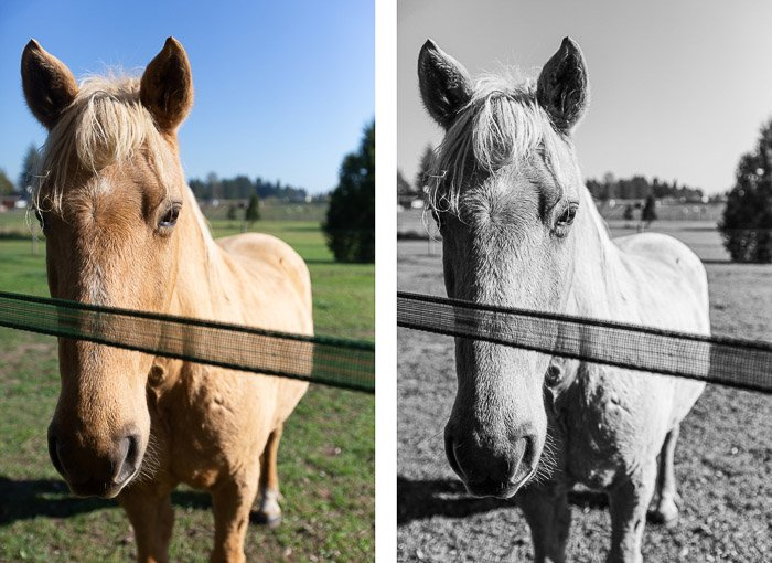 diptych portrait of a horse in a field, the second edited in a mid-contrast black and white editing style