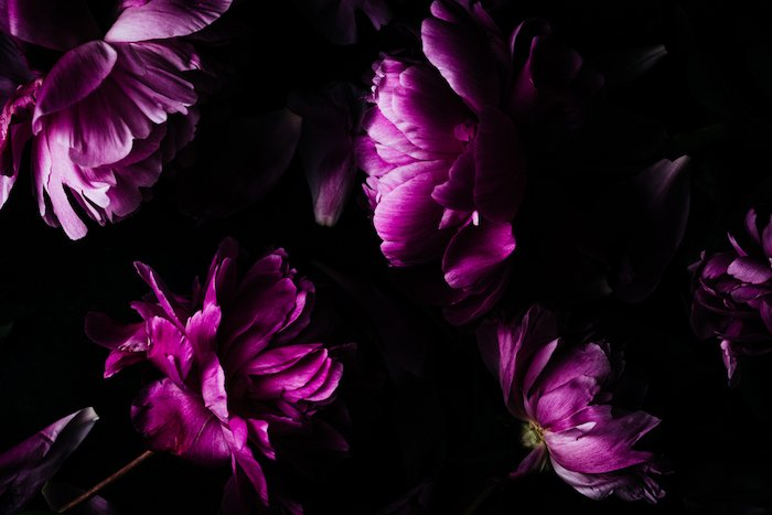 Photo of pink flowers in the dark