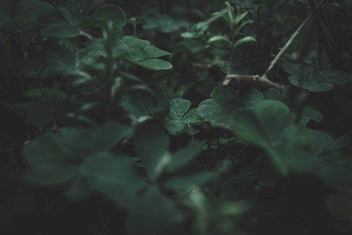 Macro photo of plants with lens vignetting