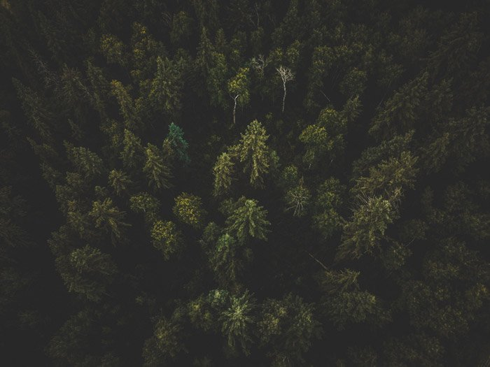 Photo of a forest from bird's eye view with photo vignetting in the corners