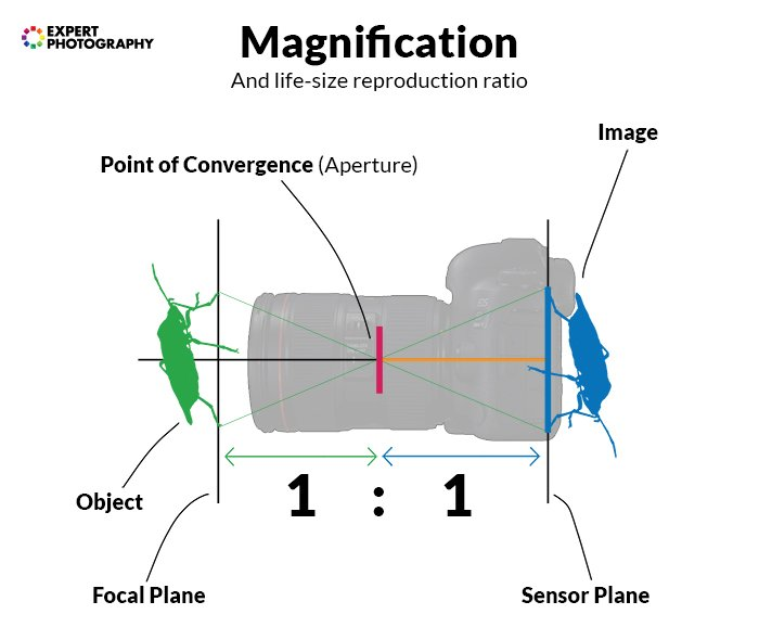 A diagram showing how magnification works in photography