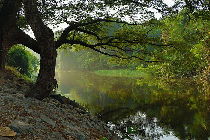serene photo of a tree by a lake