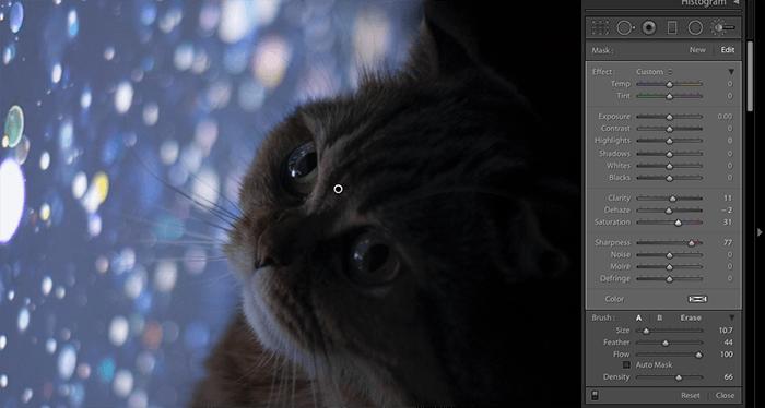 在Lightroom中编辑猫的照片的截图
