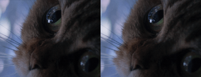 两张猫的特写照片