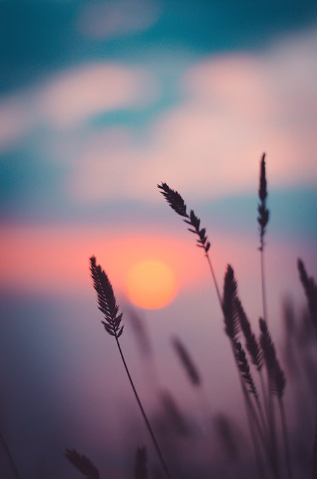 Plants with a blurred sunset in the background