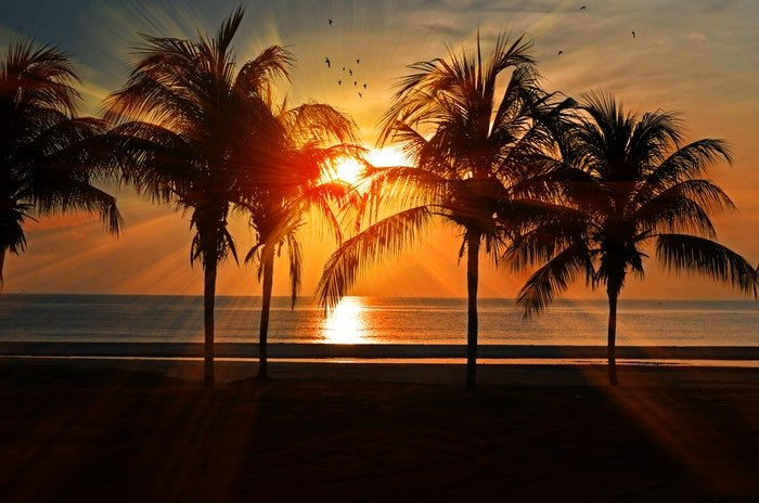 A sunset on a beach with palmtrees