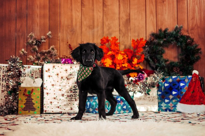 Photo of a dog in front of Christmas presents