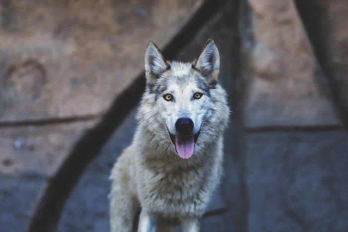 Portrait photo of a dog