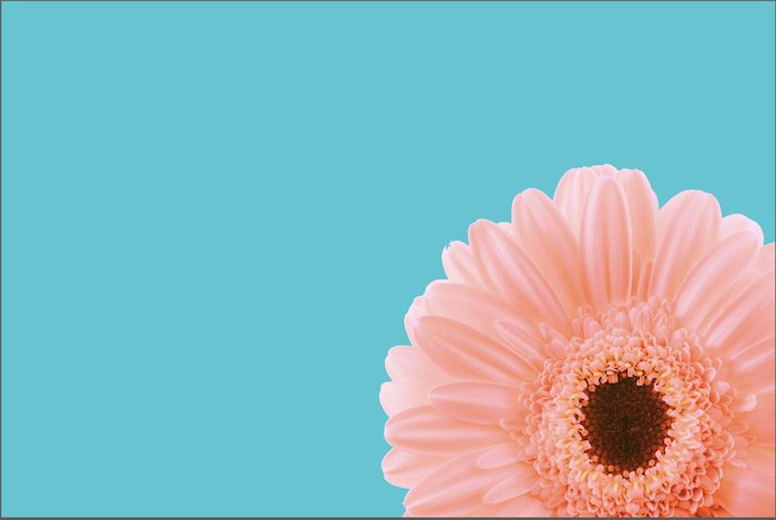 Photo of a pink flower with teal background