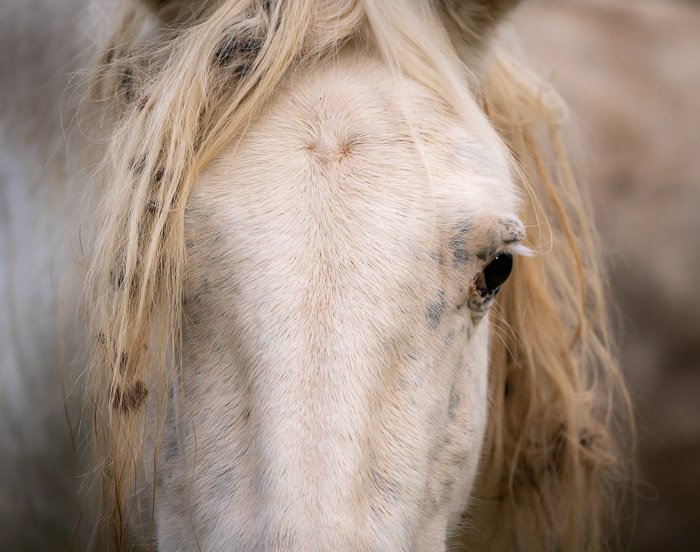 Close-up photo of the head of a horse