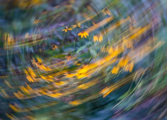 Abstract photo of flowers on a field