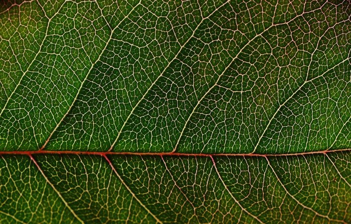 Macro photo of the texture of a leaf