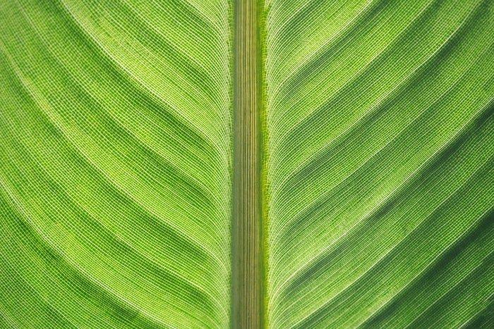 Macro photo of a green leaf
