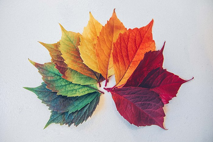 不同颜色叶的光谱