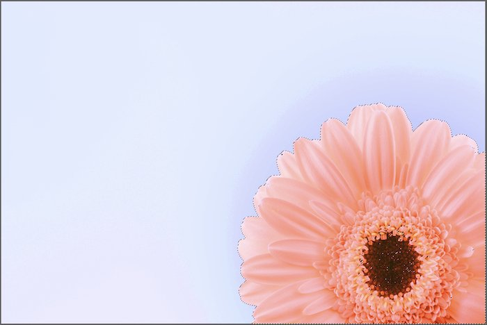 Photo of a pink flower