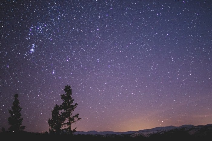 Trees silhouetted against starry night sky