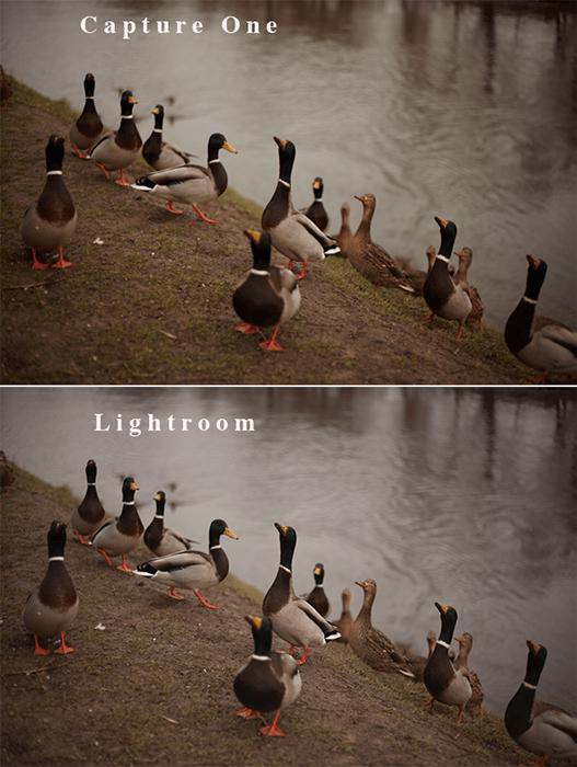 通过湖泊比较Lightroom VS捕获一个原始图像处理的一组鸭子的同一照片的百分比