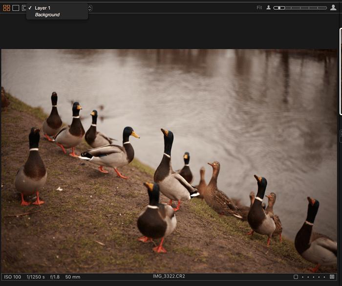 编辑一群鸭子的照片与捕获一个屏幕截图