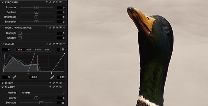 用捕获的鸭子锐化一张鸭子照片的屏幕截图