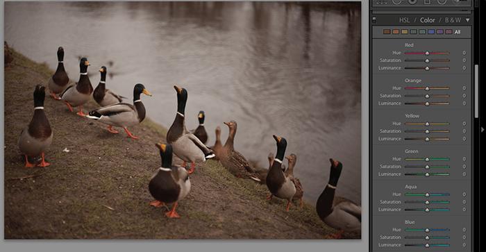 使用Lightroom滑块编辑鸭子照片的屏幕截图