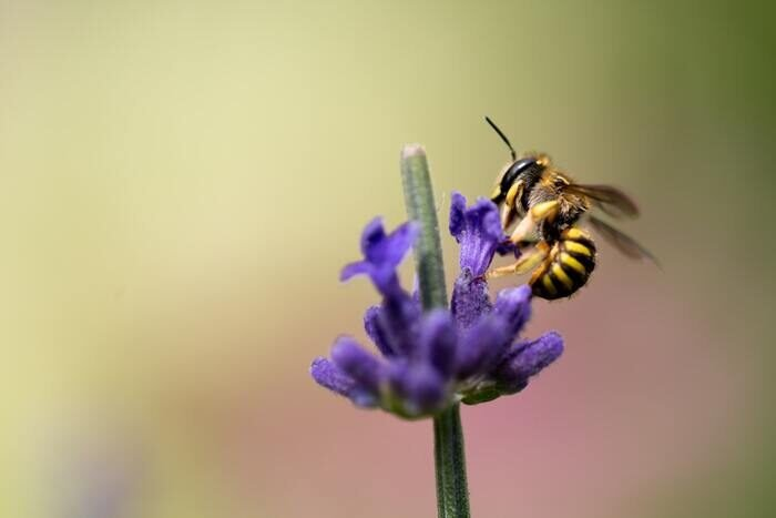Macro photo of a bee on a flower