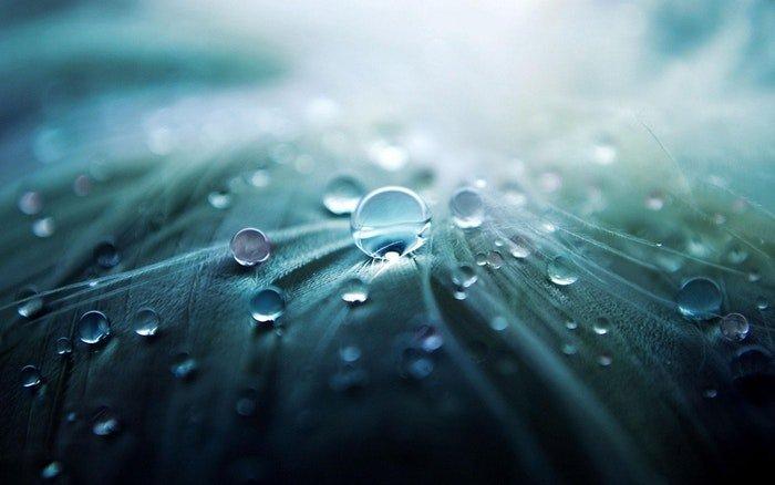 Macro photo of water drops on leaves