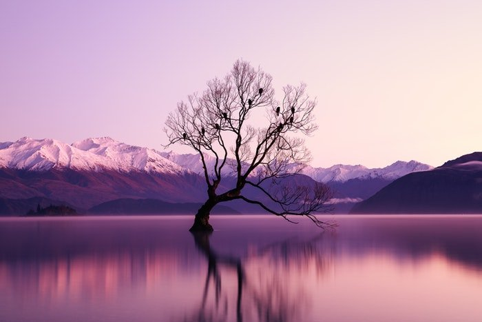 long-exposure image of a tree in a lake at evening time
