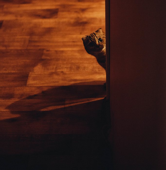 Photo of a cat peeping from a corner in tungsten light