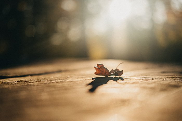An autumn leaf on a path