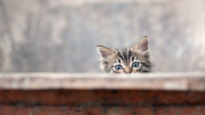curious cat sneaking from behind a wall