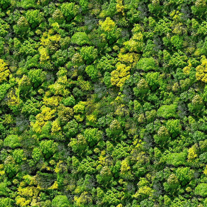 An aerial photography view of a dense forest