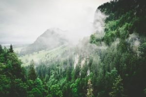 photo of a forest with mountains in the background
