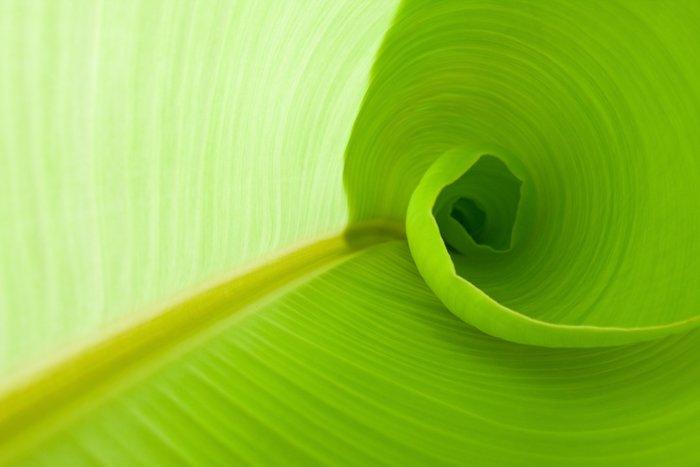 A green curved leaf