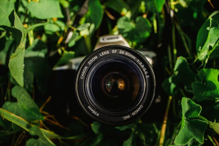 A camera with a canon zoom lens among leaves