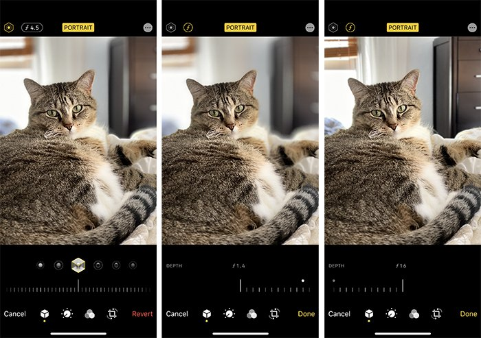 Triptych cat portrait using iPhone at f/4.5, f/1.4, and f/16.