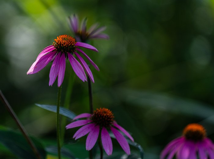 A close up of purple flowers