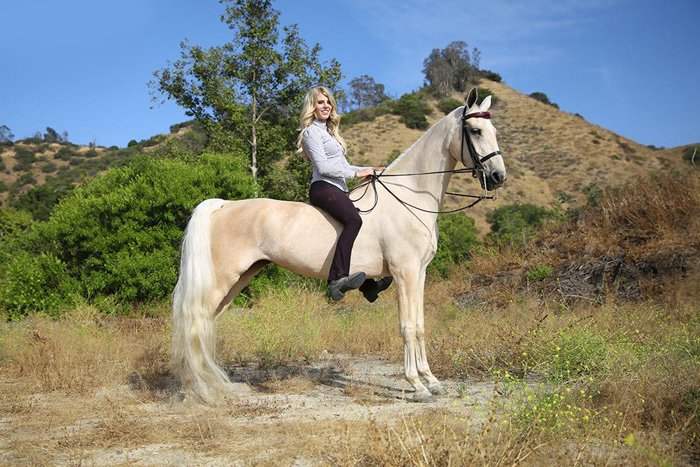 A woman sitting on a white horse outdoors