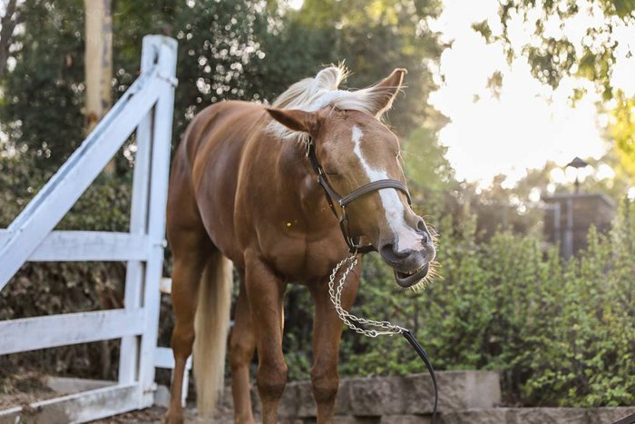 A brown and white horse outdoors