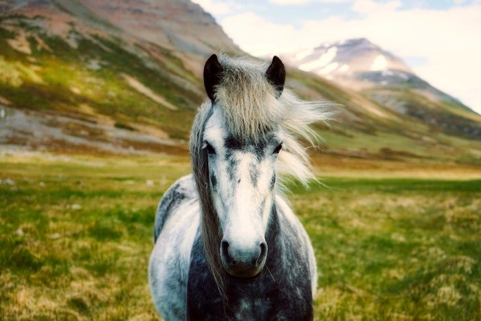 A black and white horse outdoors