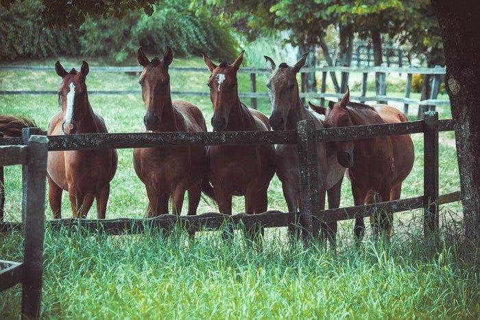 Five horses in a field