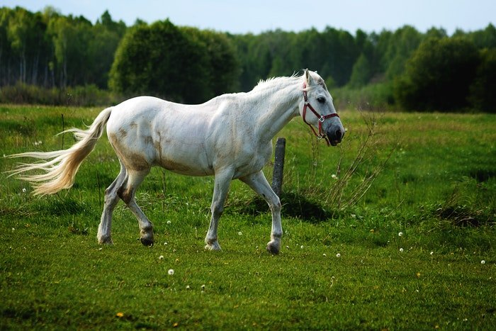 A white horse running outdoors