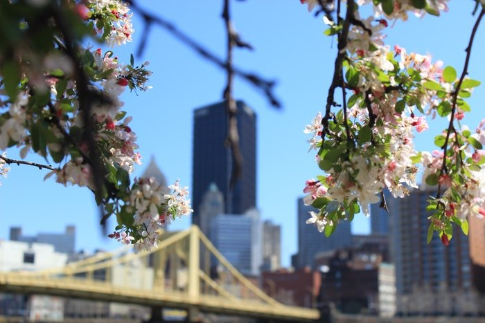 Juxtaposition of a city scene vs blossoming trees