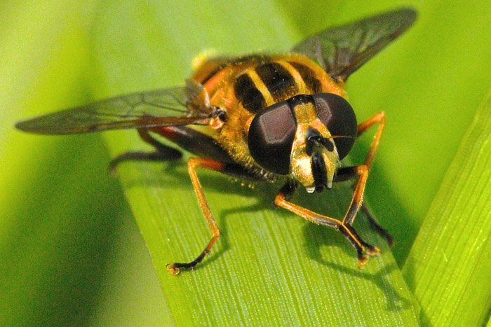A close up of a fly on a leaf