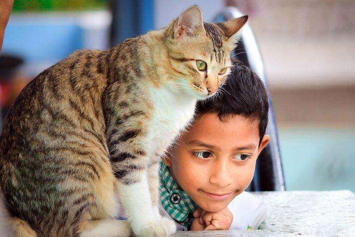 Tabby cat beside a little boy