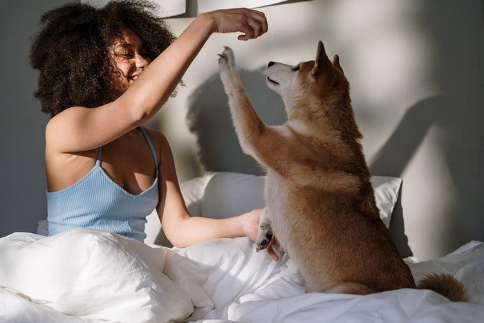 A girl playing with a little dog on a bed