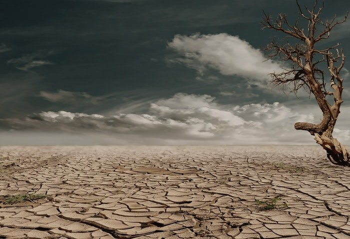 A cracked desert landscape with a lone tree