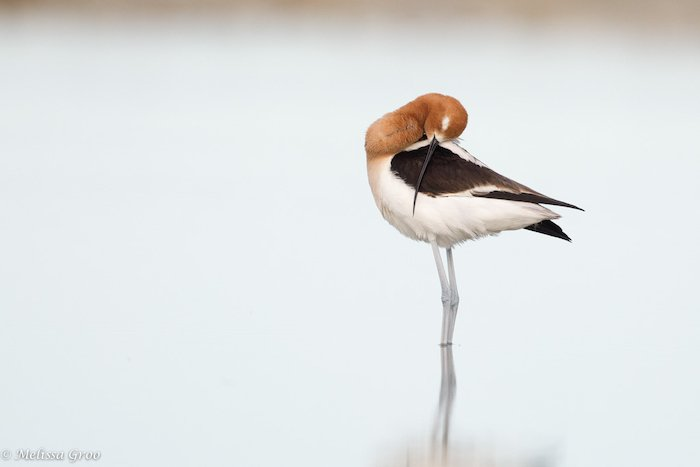 A bird standing in a pond by wildlife photographer Melissa Groo