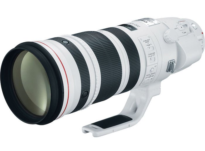 Canon 200-400 f4L IS lens
